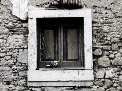janela-com-pombo.jpg