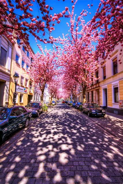 Cherry+Blossom+Shadows,+Kyoto,+Japan.jpg